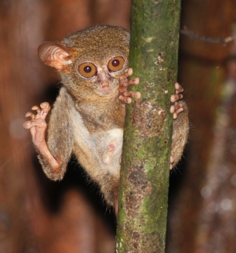 Not all about monkeys… | Dr Nancy Priston