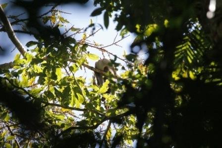 Elusive monkeys (2/6)